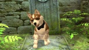 Pet (1)